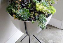 Botanicals / by Niki Brown