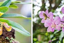 орхидеи как стиль жизнр