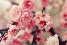 *** Sparkle your Spring***