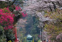 Japan Trip - Kyushu