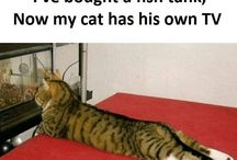 Funny / This board is to try to make you laugh! Or just a funny picture to share with friends!