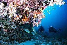 Maldives / Natures Paradise