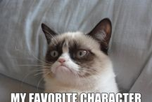 grumpy cat (you just can't not laugh)