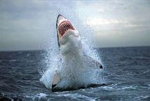 SHARK WEEK / by Charlsie Norton