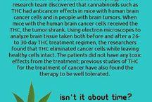 Cannabis / by Sue LeDoux
