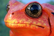 Amphibians...