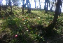 Valeggio Sul Mincio ( Verona ) / Parco Giardino Sigurtà