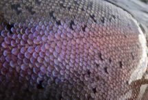 fish scales.