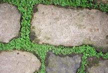 Flagstones / Flagstones
