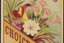 Vintage Seeds / by For The Love Of Postcards