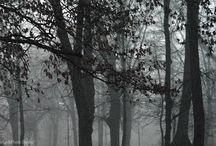 W parku Anstadta...  Łódź - Poland / Tak naprawdę park im. A.Struga... Ale od zawsze z willą Ludwika Anstadta i jego browarem... Urokliwy o każdej porze roku!