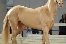 Cavalos Horses