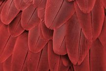 Design   Motif - Feathers! / Design inspirations - Feathers and Feathered Surfaces