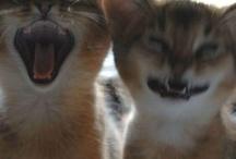 CatsAreTheBest.