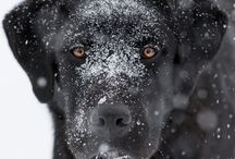 Собаки / Фотографии собак
