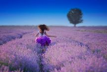 Alberi in fiore, solitari, di forma strana