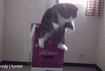 meow meow. / by Ai Kawashima