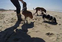 Dogs / amores da nossa vida!
