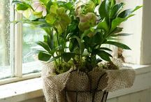 What can you do with burlap?   Check this out! / by Ronnell Karoski