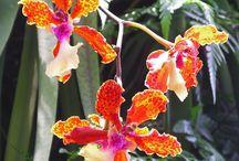 Un peu de poésie.. / Les beautés de notre flores planétaire