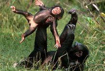 Monkey Madness / So playful, so cute, so like us.