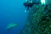 Scuba Scott  / Regulators, bcd, fins and masks. The closest thing to space on earth.