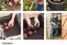 Gardening jobs step-by-step / Jobs to do in the garden each month with step-by-step instructions and images.