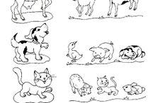 Domáce zvieratká