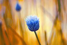 Virág fotók