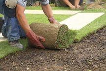 Plantar grama