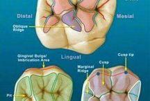 Стоматология практика