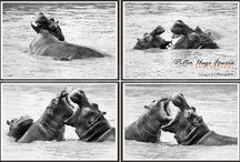 Animals / Animal Photography