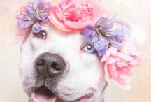 Pit Bulls & cia! / Beautiful dogs