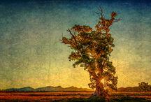 Flinders Ranges SA / SALA 2014