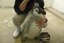 I <3 Penguins / by Dione Harjo