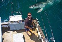 I love <3 SHARKS! <3 / by Bev Sninchak