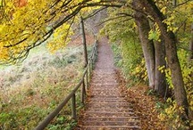Pathways/ Backroads/ Let's go for a walk