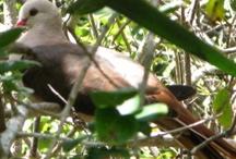 Wildlife Experiences in the Indian Ocean