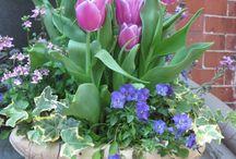 Kvety inšpirácie
