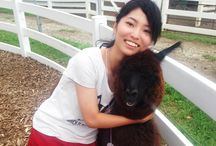 So Soft and Fluffy! Let's Go Meet the Cute and Friendly Alpaca!
