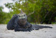 Galapagos / Galapagos trip info