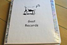 get me a goat, please / farming, goats, homestead, goat