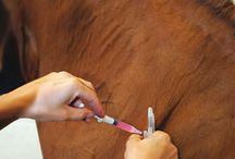 Horse Care / Be a smarter Equestrian.