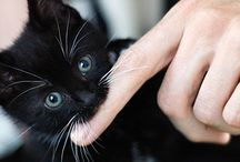 """An """"Awww"""" Moment / by Tanya Sumner"""