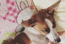 Jeck Rassel Terrier / My puppy Party
