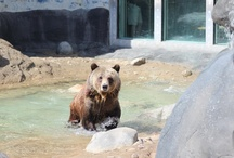 Grizzly Bears / by Tulsa Zoo
