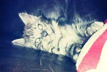 Cats / My World