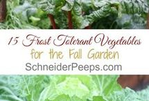 Frost and veg gardens