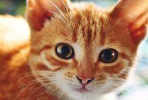 Cats:D