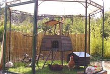 Cooped Up / Chicken Coop Ideas / by Linda Cook